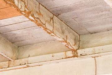 Comment savoir si on a des termites ?