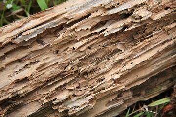 Comment traiter et protéger tous vos bois ?