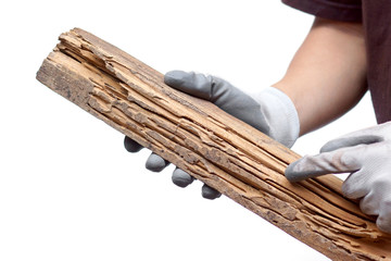 Comment traiter un bois piqué par les vers ?