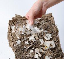 Traitement champignon